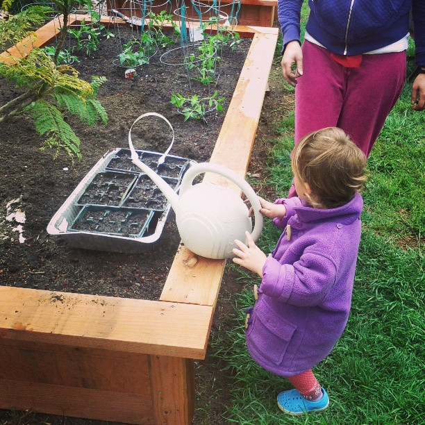 planting in our garden