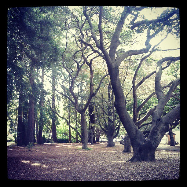 Taking my sick & sleepy baby for a walk through UC Berkeley