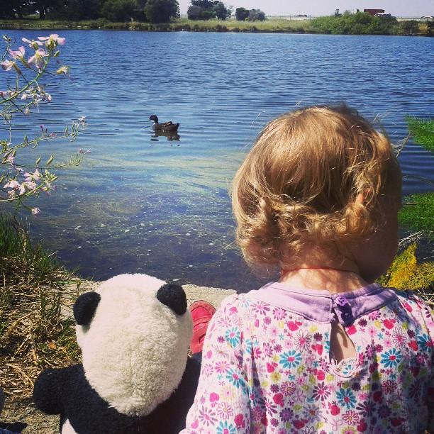 Bird watching with panda at the aquatic park