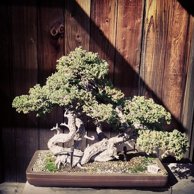 I love every bonsai
