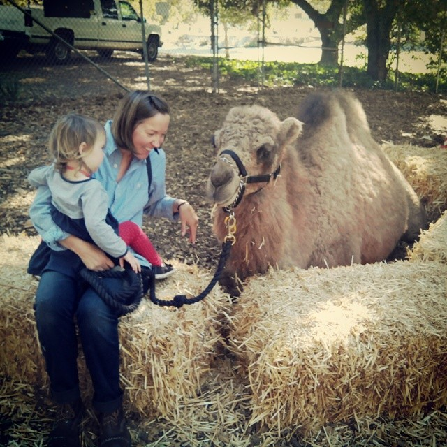Hanging out with a camel.