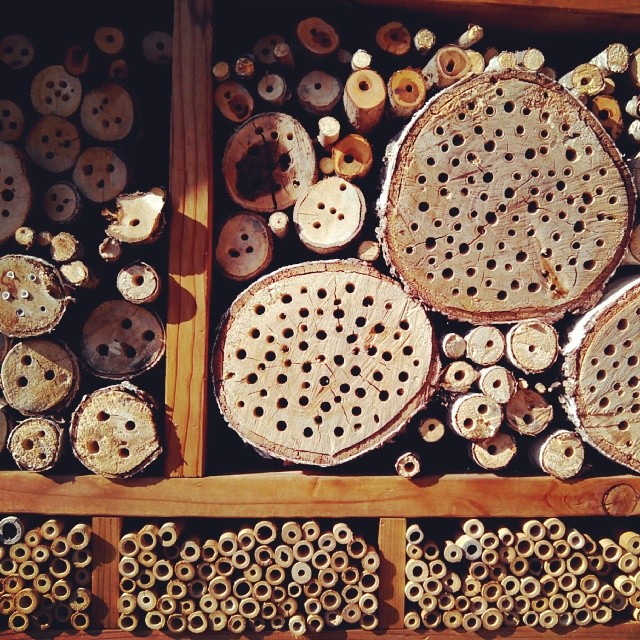 Bee friendly housing