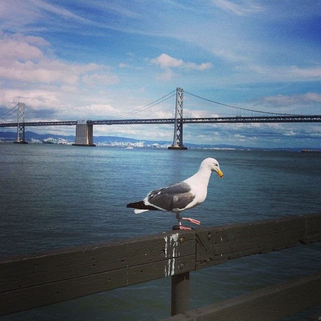 walking around the ferry building
