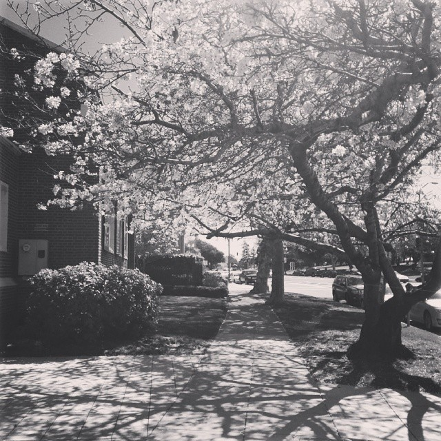 raining spring petals