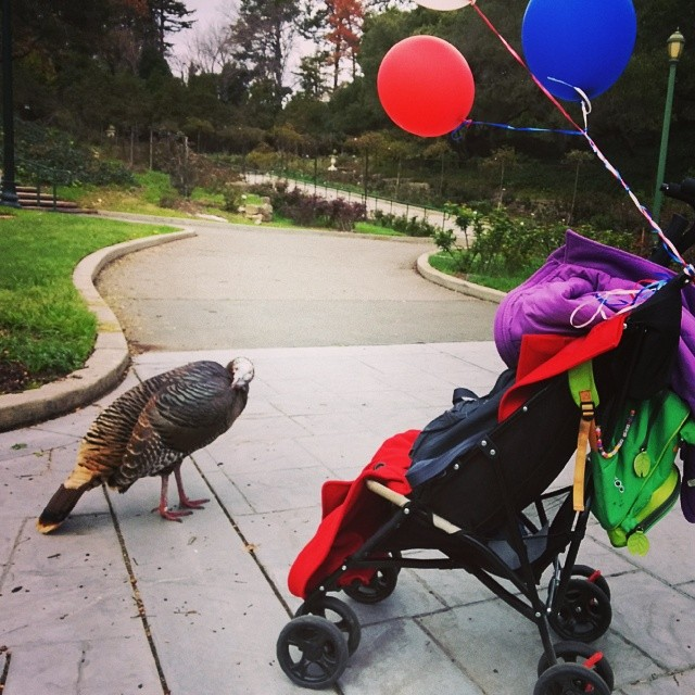 Our rose garden picnic included balloons & a turkey.