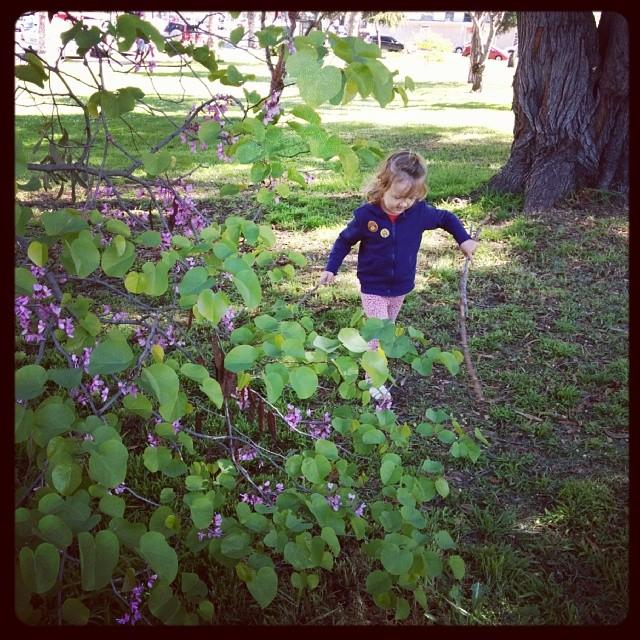 clover finding sticks