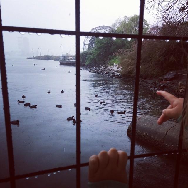 rainy day bird watching