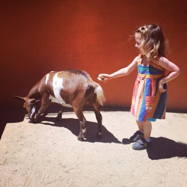 Emma loved brushing the goats at the petting zoo