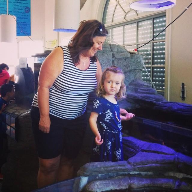 touch tanks in pier aquarium