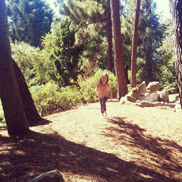 Running through the trees