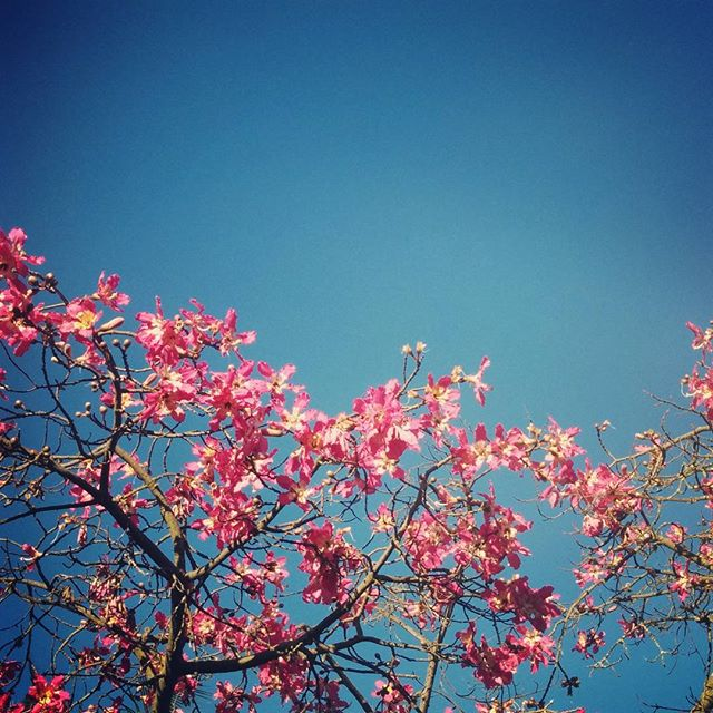This tree and these blooms carry beautifully painful memories as the last time I saw a friend this tree was in bloom.
