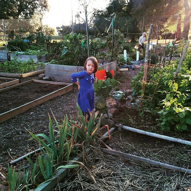 Keeping a garden is really tough. But we still love it.