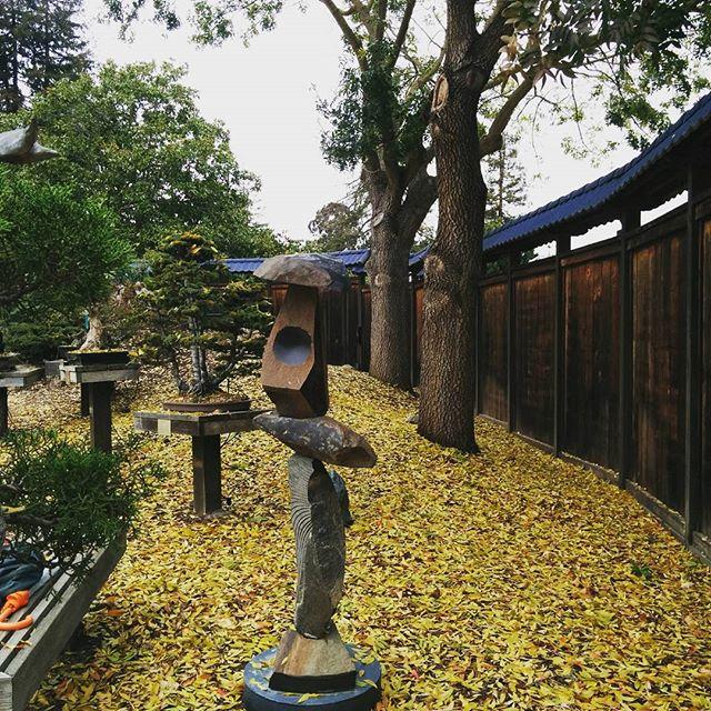 Bonsai Garden @gardens_lake_merritt