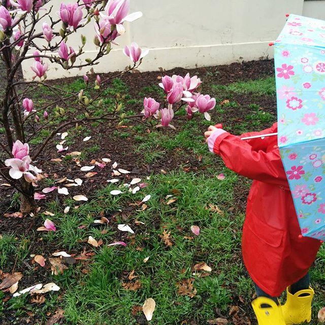 Magnolias and Rain