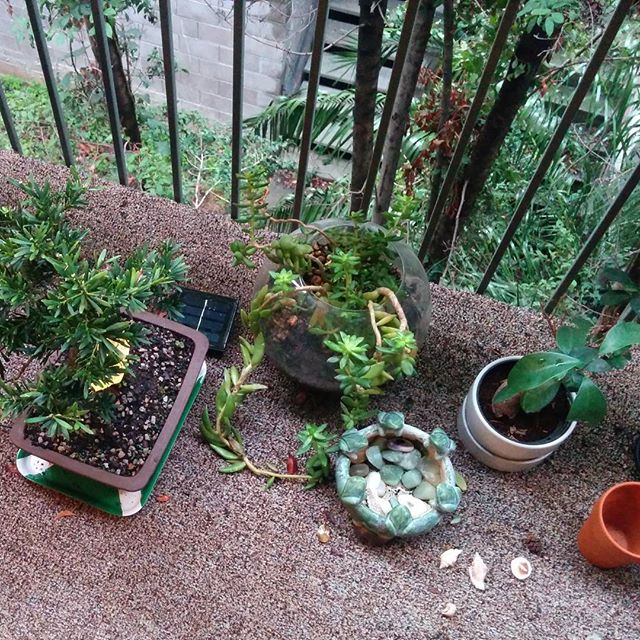 I think our balcony plants like all this rain. :)