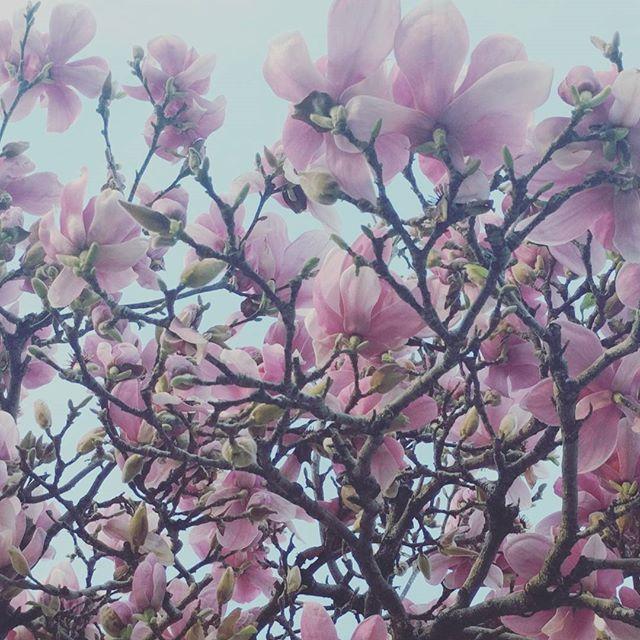 Lovely days of February