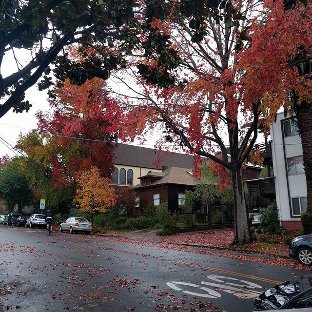 Berkeley looks nice all the time but the autumn leaves are so good. Miss those bicycle Blvds!