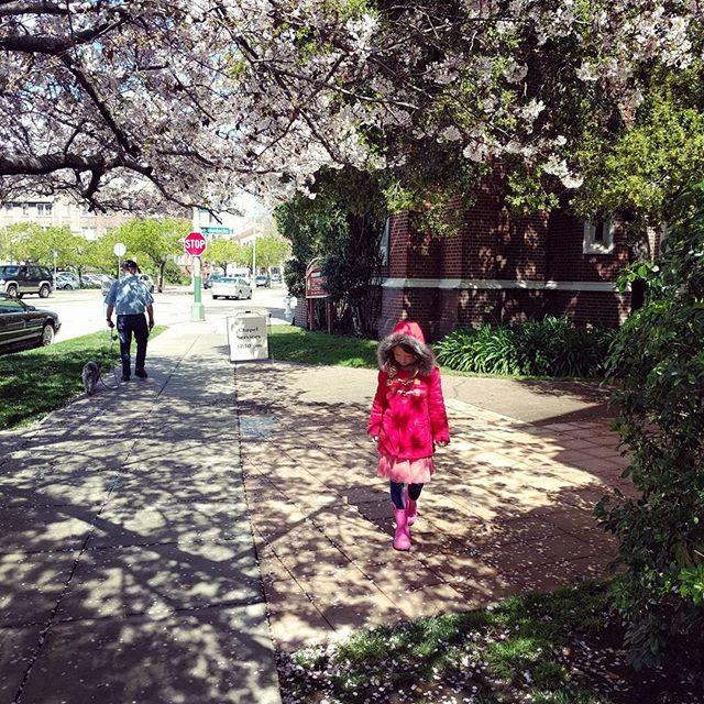 happy spring! It's raining petals