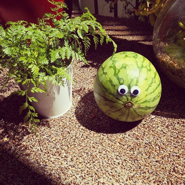 Our CSA sent googly eyes with our produce!