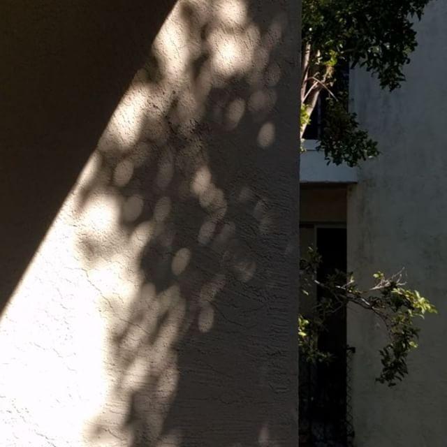 trees shadows 🌖🌘