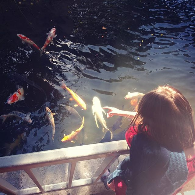 Big koi, a huge catfish, and a dozen turtles to visit at the Oakland museum.