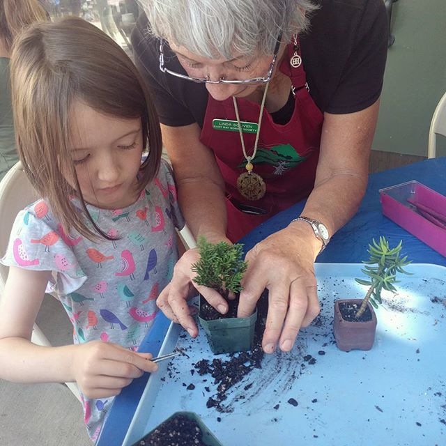 Bonsai potting at the Garden Center