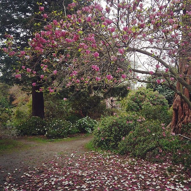 never stop posting magnolias!