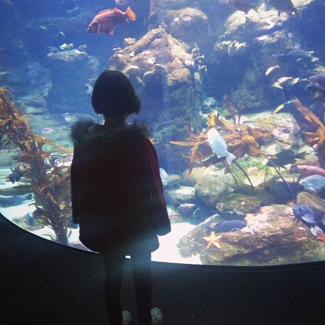 We reserve Discover & Go passes from the library every spring to visit the Academy of Sciences. It is an amazing place and we save $70 in admission costs (1adult, 1 child)!