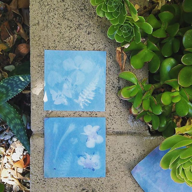 making Sun Prints