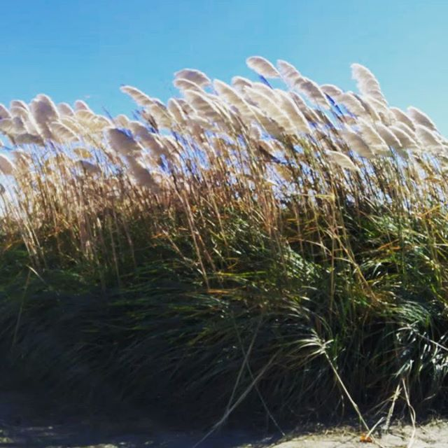 blowy beach tails