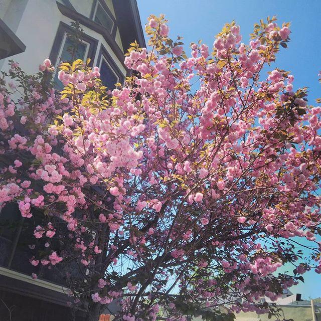 pink fluffy tree